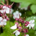 nature-jardin-aziza-2015-marie-colette-becker-02