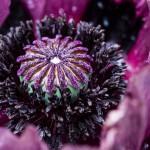 nature-jardin-aziza-2015-marie-colette-becker-06