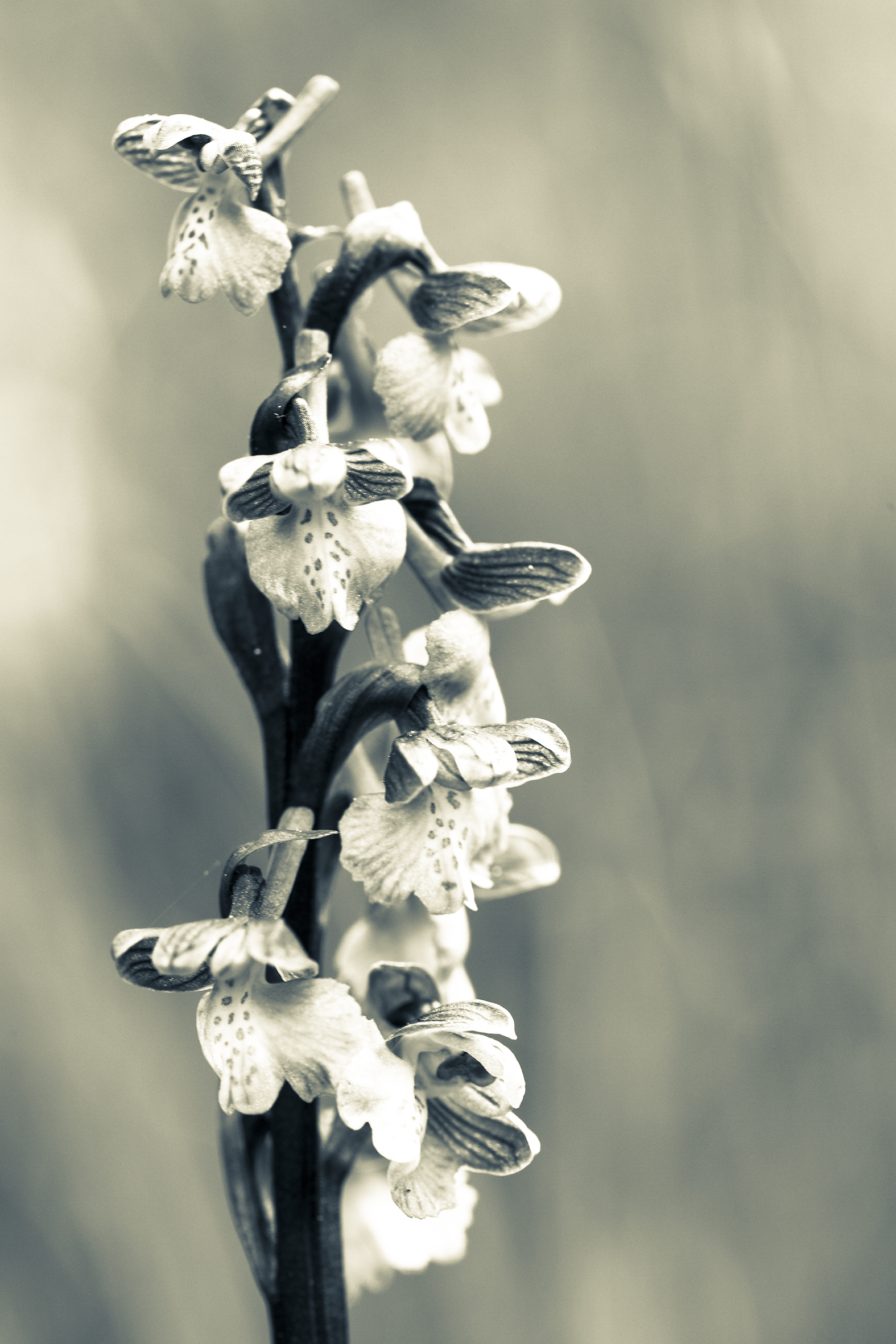 nature-orchidées-2015-marie-colette-becker-02