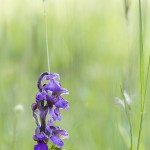 nature-orchidées-2015-marie-colette-becker-04
