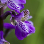 nature-orchidées-2015-marie-colette-becker-06