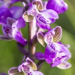 nature-orchidées-2015-marie-colette-becker-07