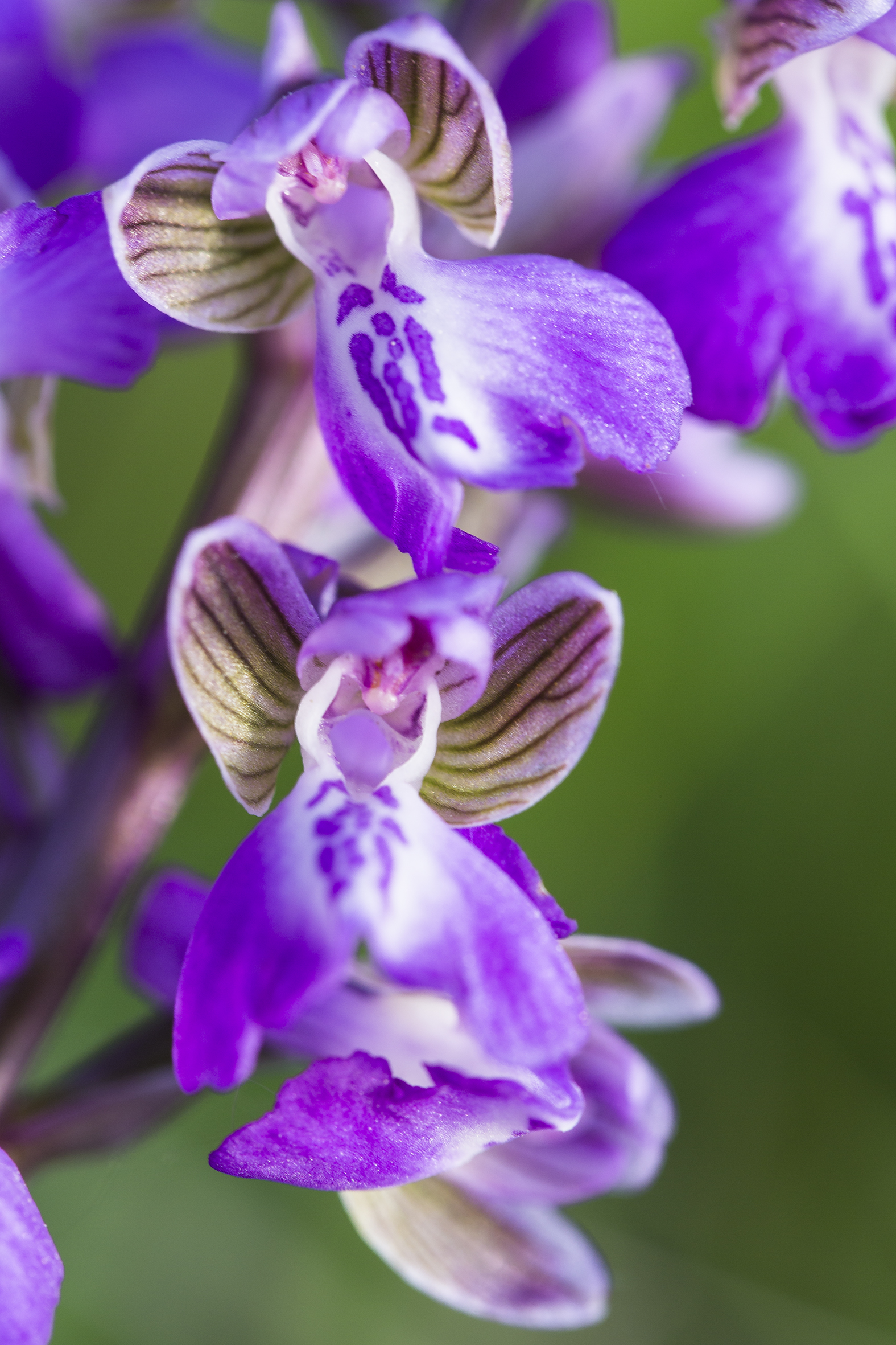 nature-orchidées-2015-marie-colette-becker-09