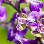 nature-orchidées-2015-marie-colette-becker-10
