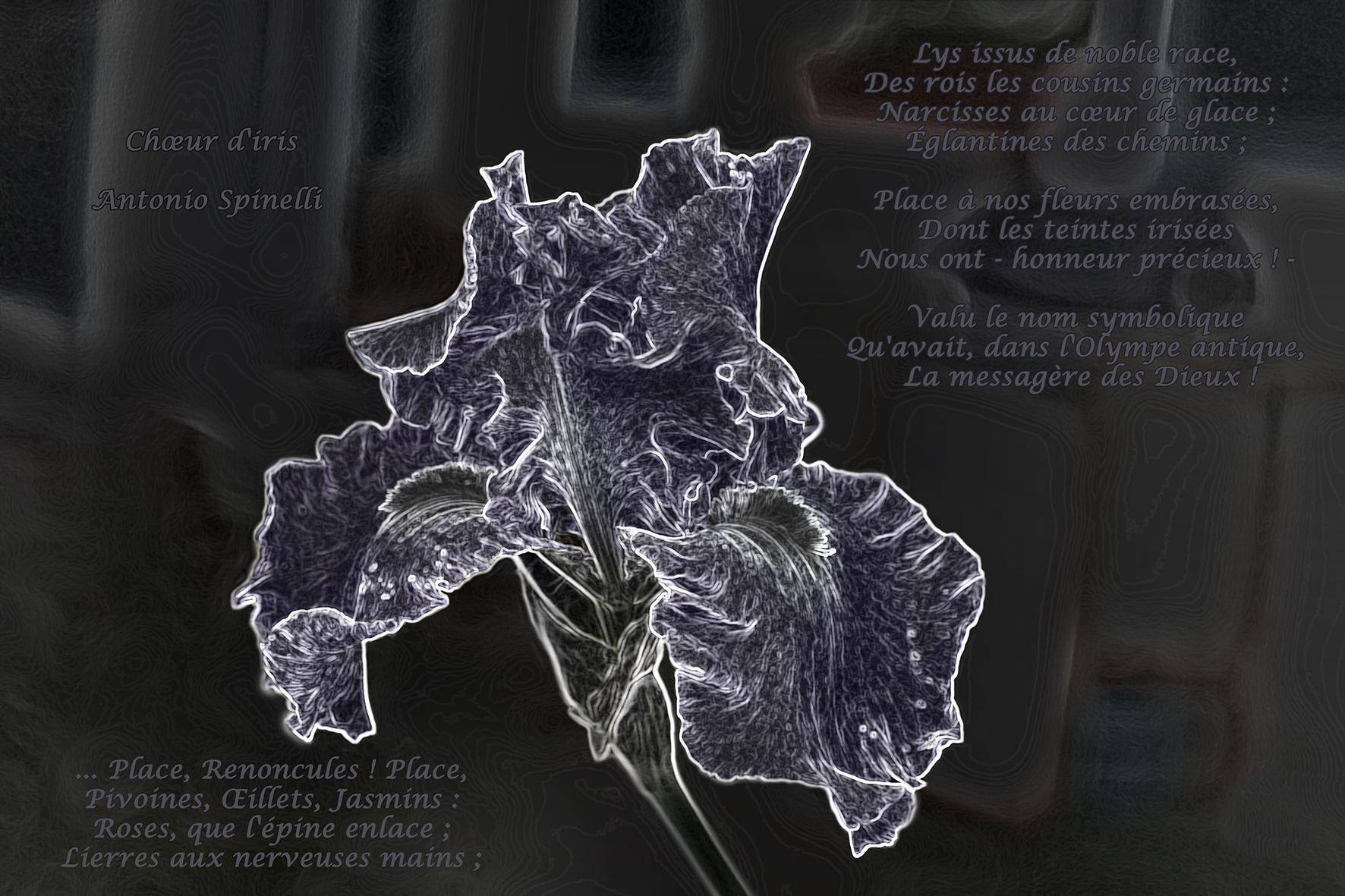 graphisme-iris-marie-colette-becker-08