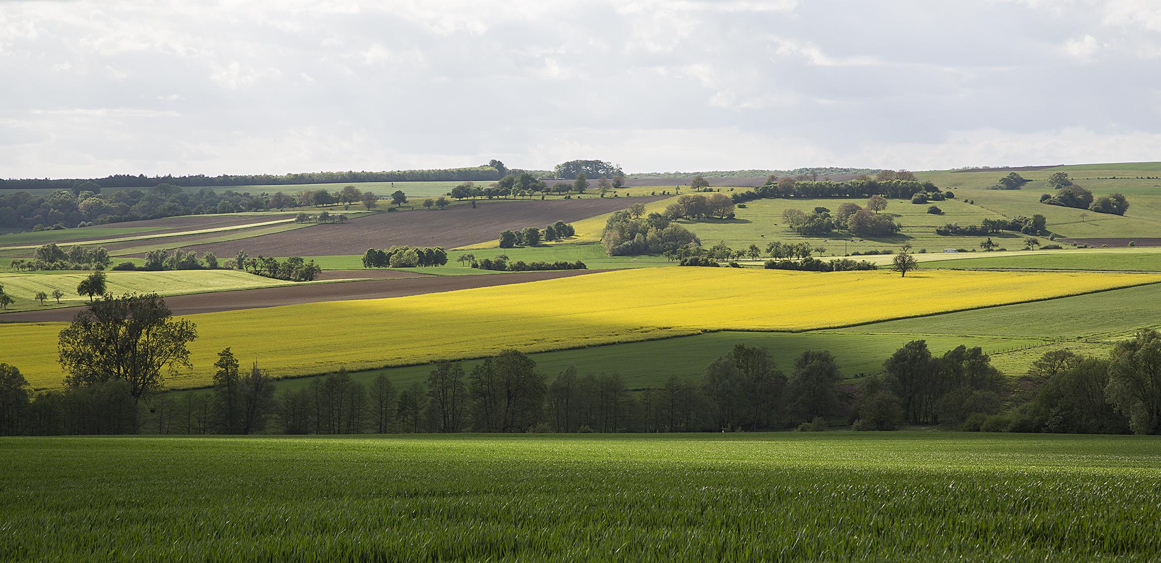naturaliste-alsace-bossue-printemps-2015-marie-colette-becker-06
