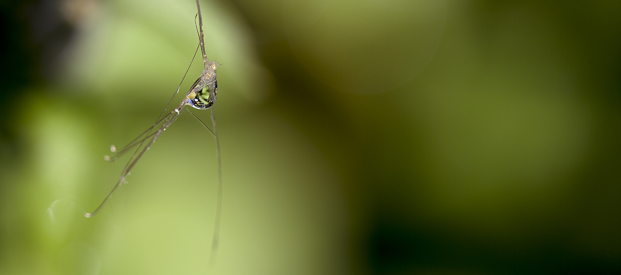 naturaliste-macro-2013-marie-colette-becker-05
