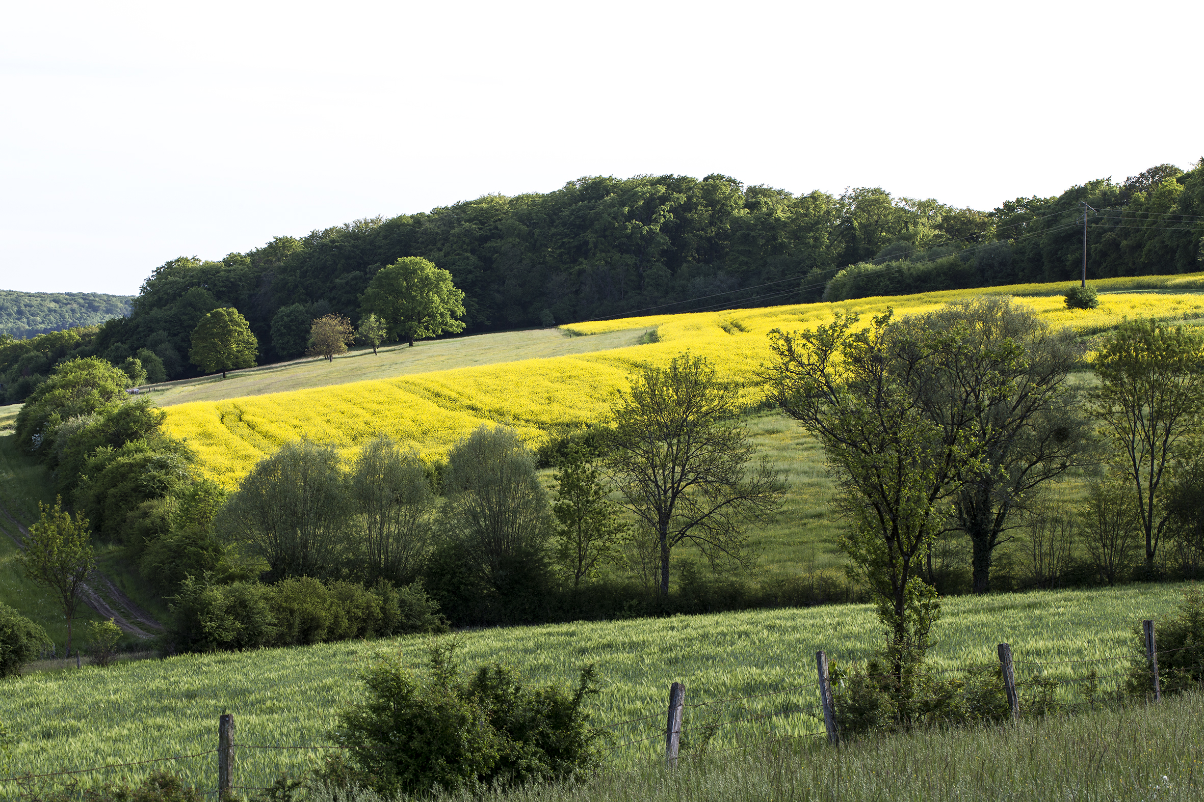 naturaliste-printemps-2015-marie-colette-becker-17