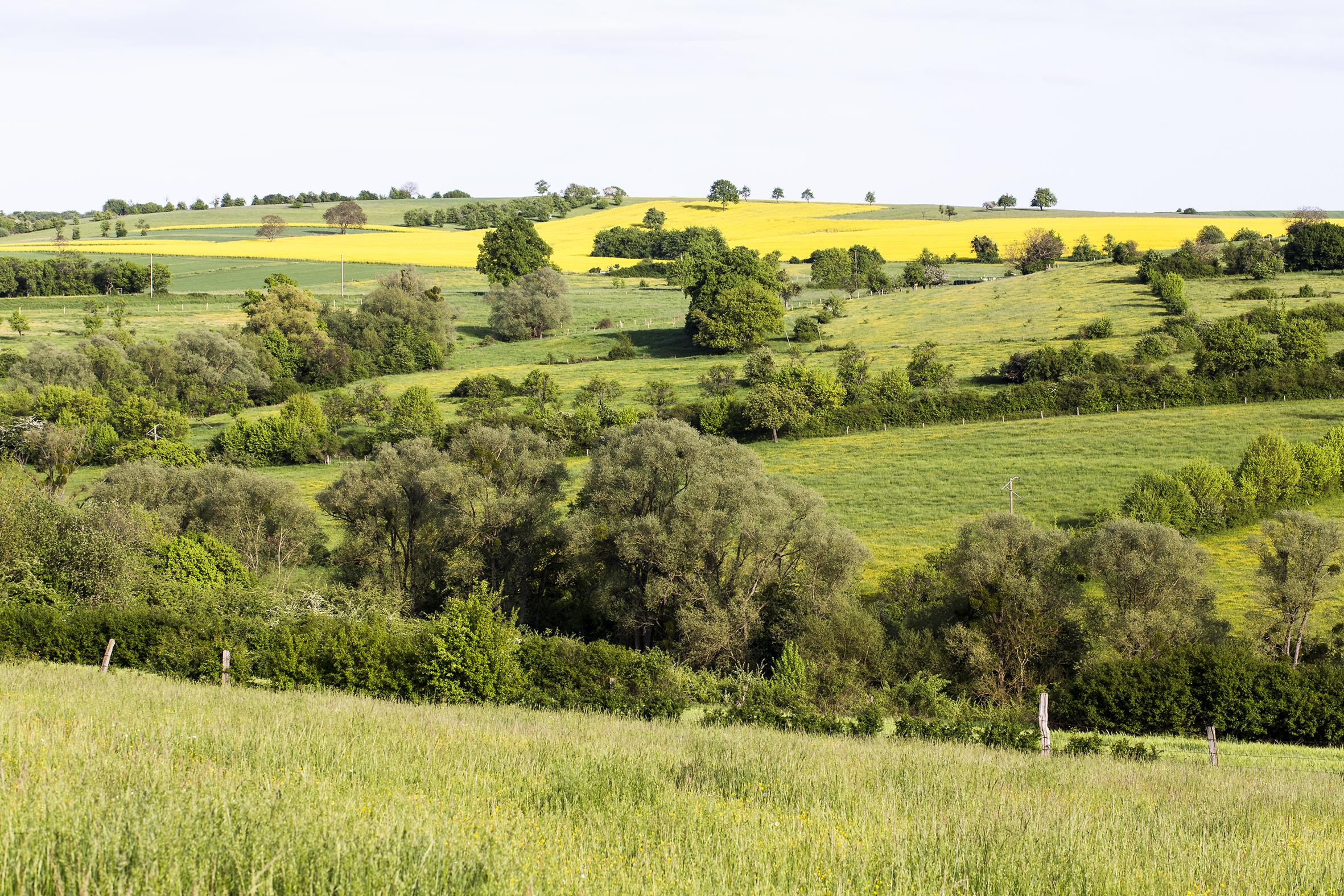 naturaliste-printemps-2015-marie-colette-becker-20