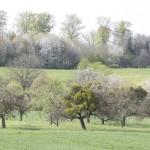 naturaliste-printemps-domfessel-2016-marie-colette-becker23