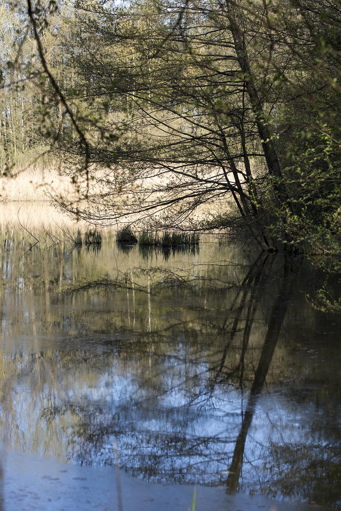 naturaliste-printemps-sarralbe-2016-marie-colette-becker26