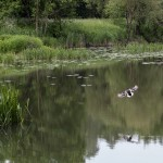 naturaliste-sarre-sarralbe-printemps-2015-marie-colette-becker-10
