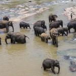 Sri-Lanka-orphelinat-elephants-2017-Marie-Colette-Becker_01