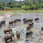 Sri-Lanka-orphelinat-elephants-2017-Marie-Colette-Becker_02