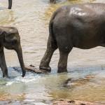 Sri-Lanka-orphelinat-elephants-2017-Marie-Colette-Becker_03