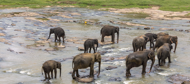 Sri-Lanka-orphelinat-elephants-2017-Marie-Colette-Becker_04