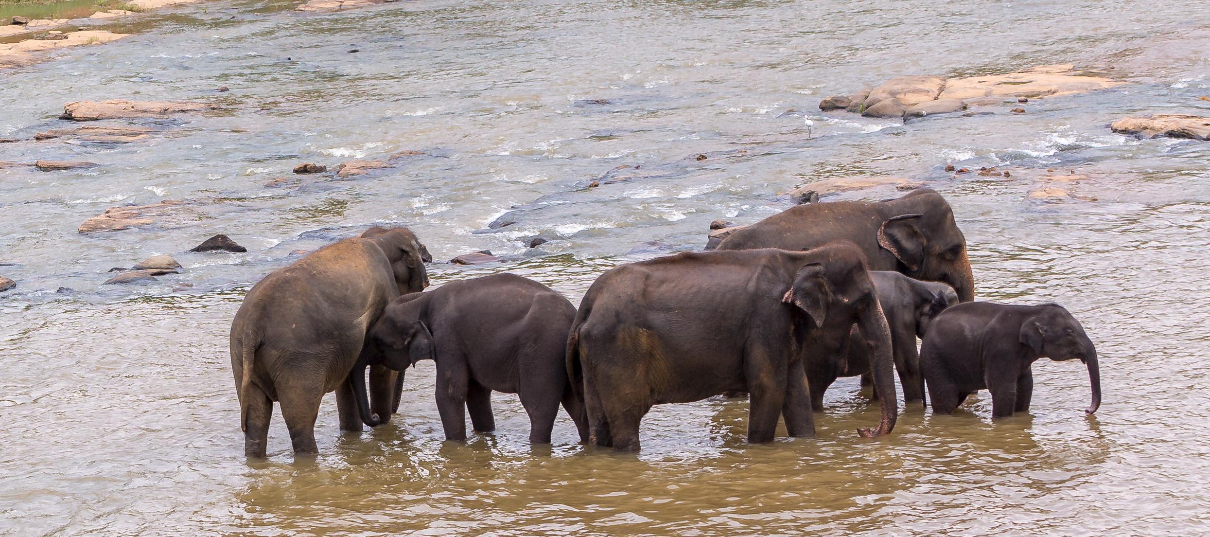 Sri-Lanka-orphelinat-elephants-2017-Marie-Colette-Becker_05