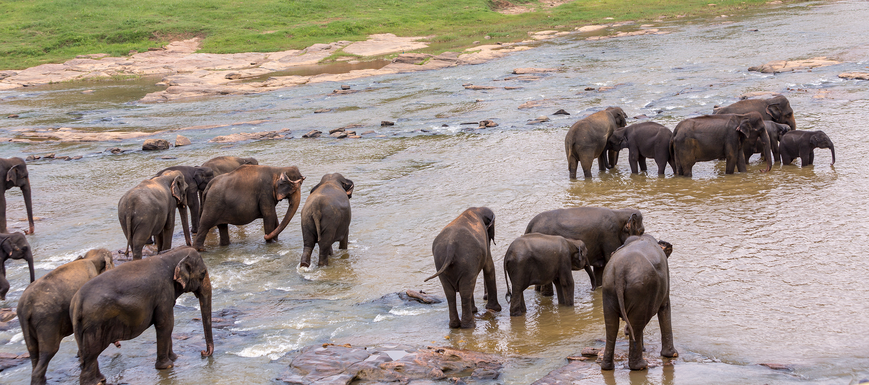 Sri-Lanka-orphelinat-elephants-2017-Marie-Colette-Becker_06