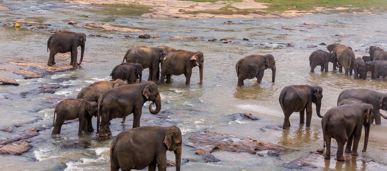Sri-Lanka-orphelinat-elephants-2017-Marie-Colette-Becker_07