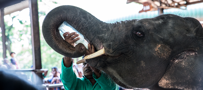Sri-Lanka-orphelinat-elephants-2017-Marie-Colette-Becker_08