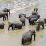 Sri-Lanka-orphelinat-elephants-2017-Marie-Colette-Becker_09